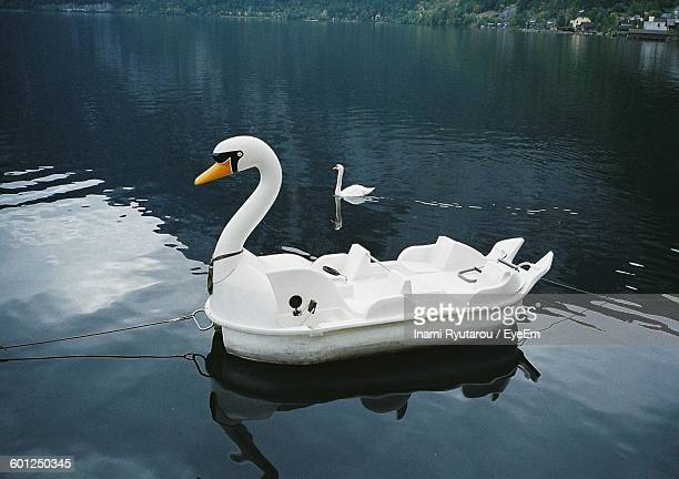 swan pedal boat on lake - swan stock pictures, royalty-free photos & images