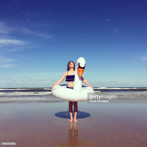 swan portrait - budding tween stock photos and pictures