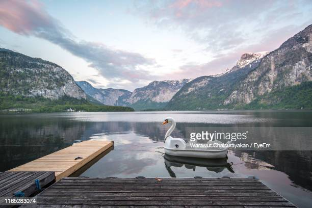 swan shaped pedal boat in river against sky during sunset - pedal boat stock pictures, royalty-free photos & images