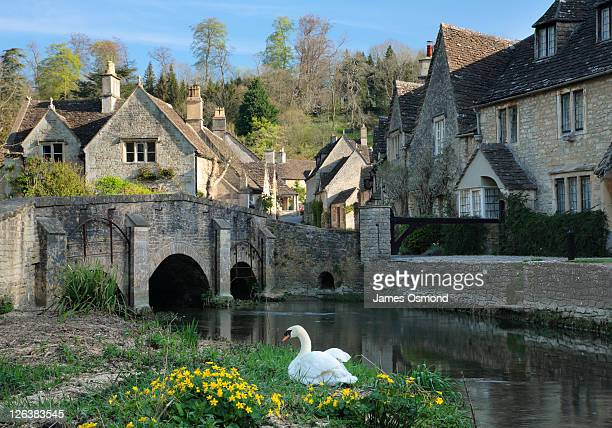 Swan sitting on the banks of the brook in the Wiltshire village of Castle Combe