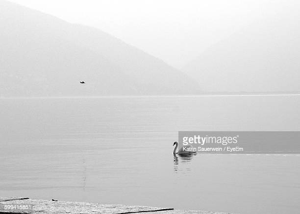 Swan Swimming On Lake Against Mountains During Foggy Weather