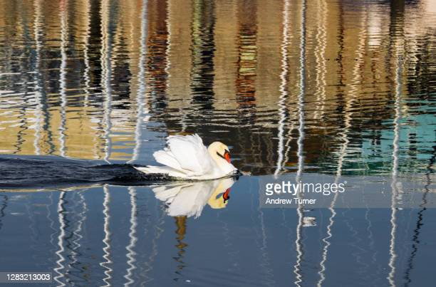 swanning off - nautical vessel stock pictures, royalty-free photos & images