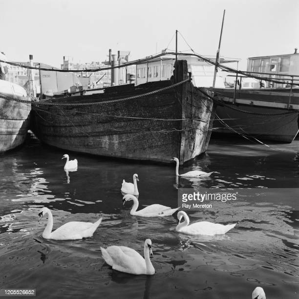 Swans and boats on the Thames at Chelsea, London, September 1959.
