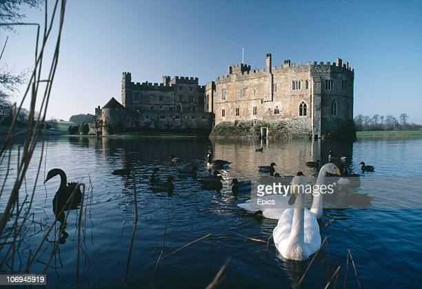 Swans and ducks swim in the moat in front of Leeds Castle, Maidstone, Kent, February 1984. Leeds castle dates back to 1119 and passed into Royal...