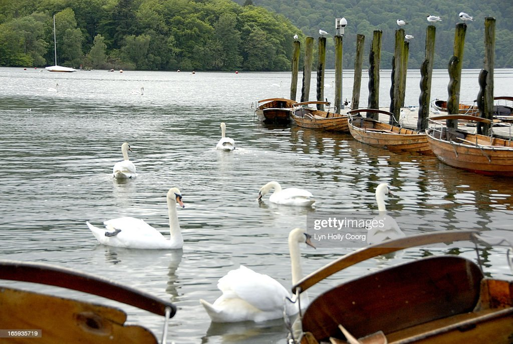 Swans and rowing boats on Lake Windermere, UK : Stock Photo