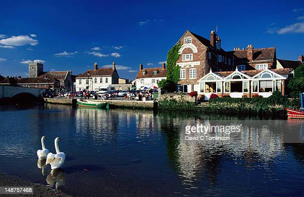 swans and waterside buildings on river frome. - wareham stock photos and pictures