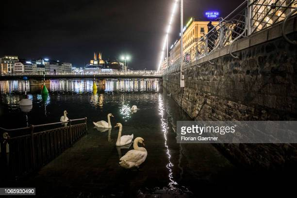 Swans are pictured in front of the skyline at the Lake Geneva on November 27 2018 in Geneva Switzerland