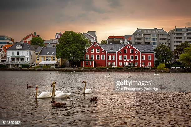 Swans, Ducks and Seagulls in the Breiavatnet Lake with Stavanger City Skyline in the Background, Rogaland County, Norway