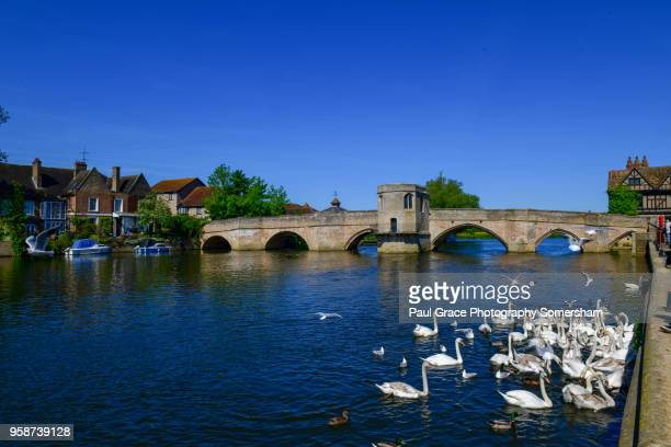 Swans gather in front of the 15th Century St Ives Bridge, River Great Ouse.
