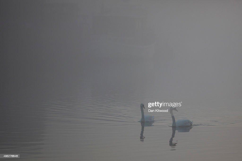 Swans glide through the fog on the River Trent on November 1, 2015 in Newark Upon Trent, England.