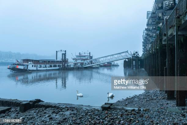 Swans in empty, deserted Central London on the River Thames on a cool blue misty morning on day one of Coronavirus Covid-19 lockdown showing urban...