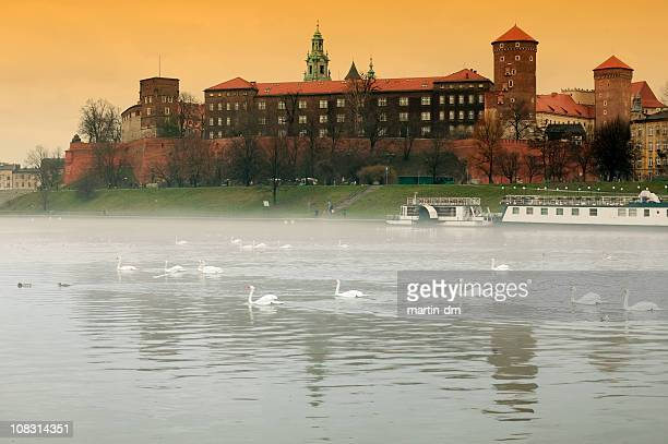 swans in krakow - wawel cathedral stock pictures, royalty-free photos & images