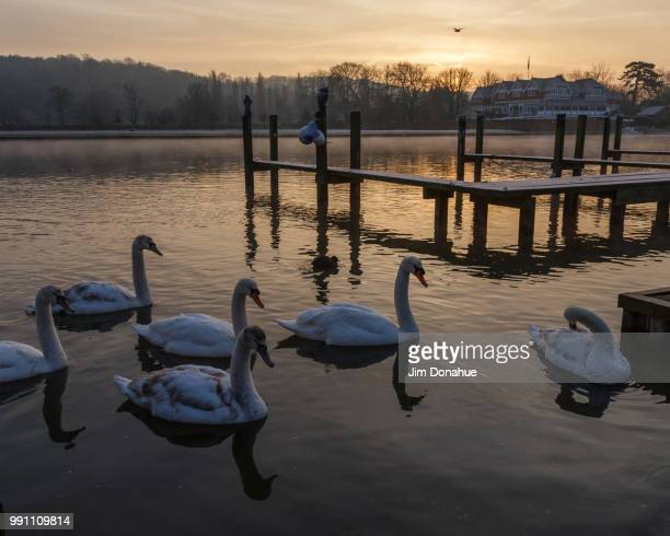 swans on a frosty thames - jim donahue stock pictures, royalty-free photos & images