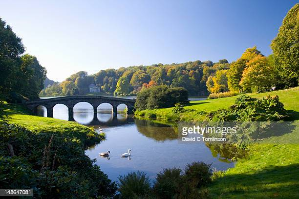 Swans on lake in front of Palladian bridge in autumn, Stourhead Landscape Garden.