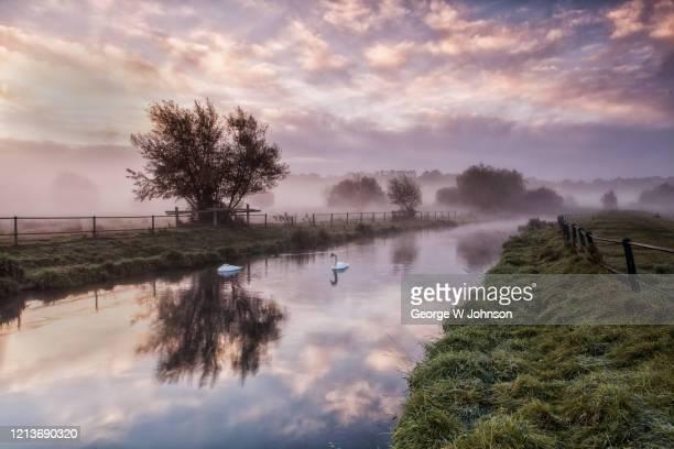 swans - hertford hertfordshire stockfoto's en -beelden
