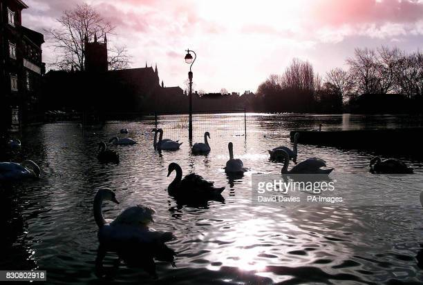 Swans swim along the banks of the flooded River Severn in Worcester Two severe flood warnings remained in force in Wales as some of the worst weather...