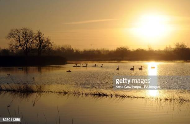 Swans swim on floodwater from Pocklington Canal near SuttonuponDerwent East Yorkshire as the chairman of the Environment Agency has hit back at...