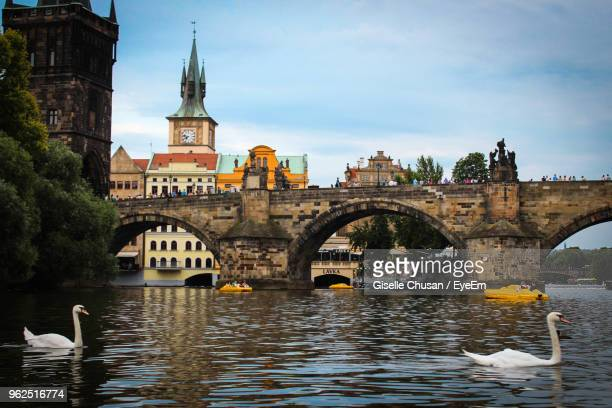swans swimming on river against sky in city during sunset - bohemia czech republic stock pictures, royalty-free photos & images