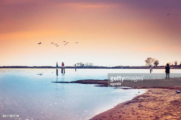swans swimming on the sea - bay of water stock pictures, royalty-free photos & images