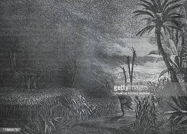 A swarm of locusts in North Africa Engraving