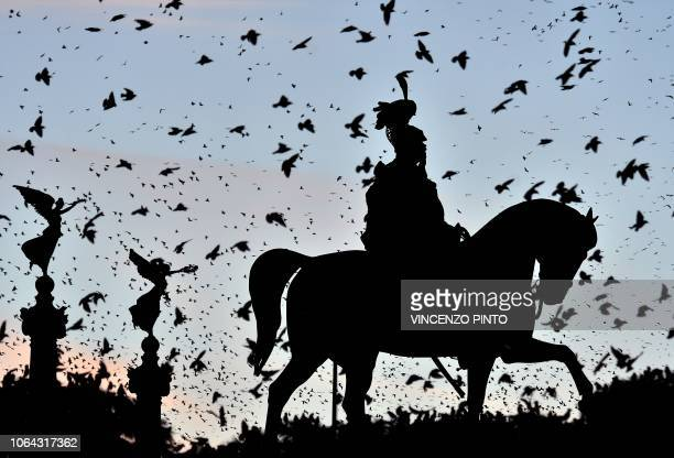 Swarm of starlings flying over the city center is pictured as the sun sets over the Altare della Patria monument in Rome on November 22, 2018.
