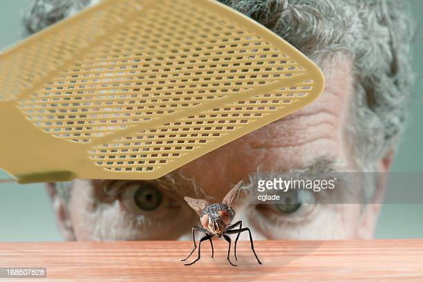 Swatting the fly