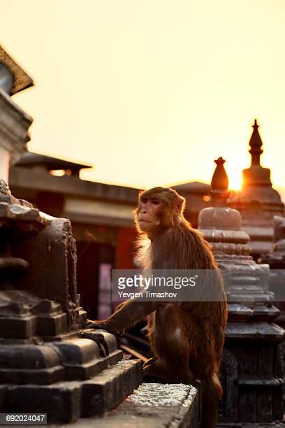 Swayambhunath, the monkey Temple, Kathmandu, Nepal