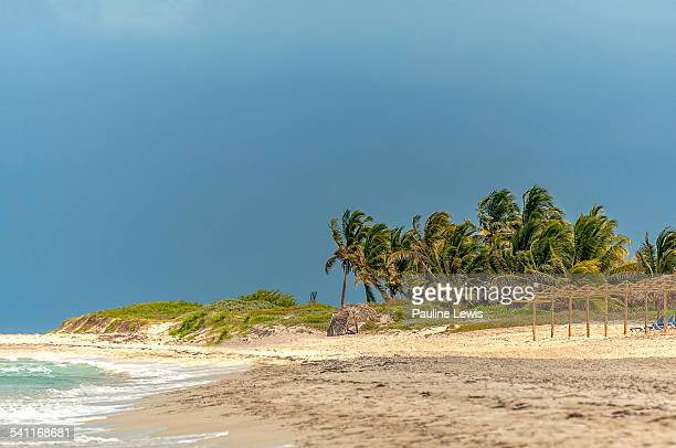 swaying palm trees - varadero beach stock pictures, royalty-free photos & images