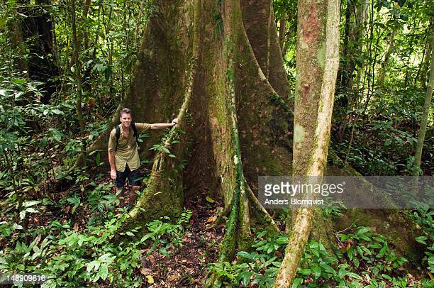 sweaty tourist standing by buttress roots of large dipterocarp tree in rainforest. - dipterocarp tree stock pictures, royalty-free photos & images