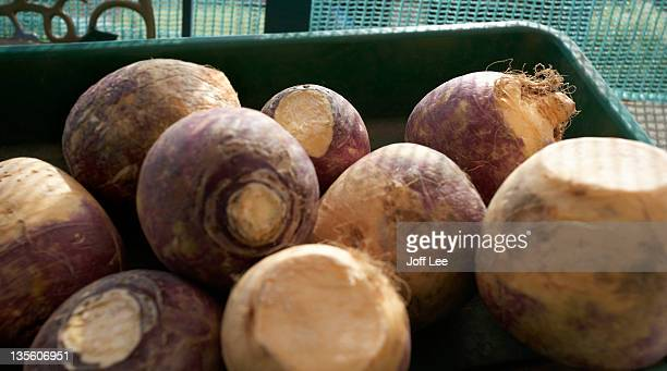 swede - rutabaga stock pictures, royalty-free photos & images