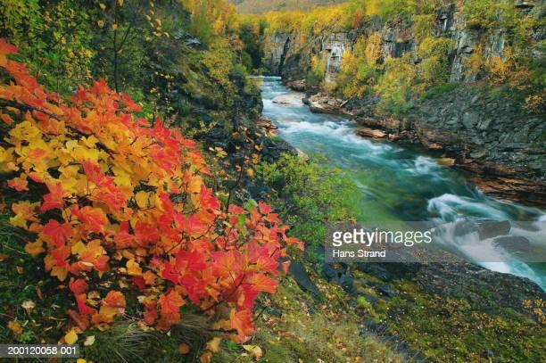 Sweden, Lapland, Abisko National Park, Abisko Canyon, Fall