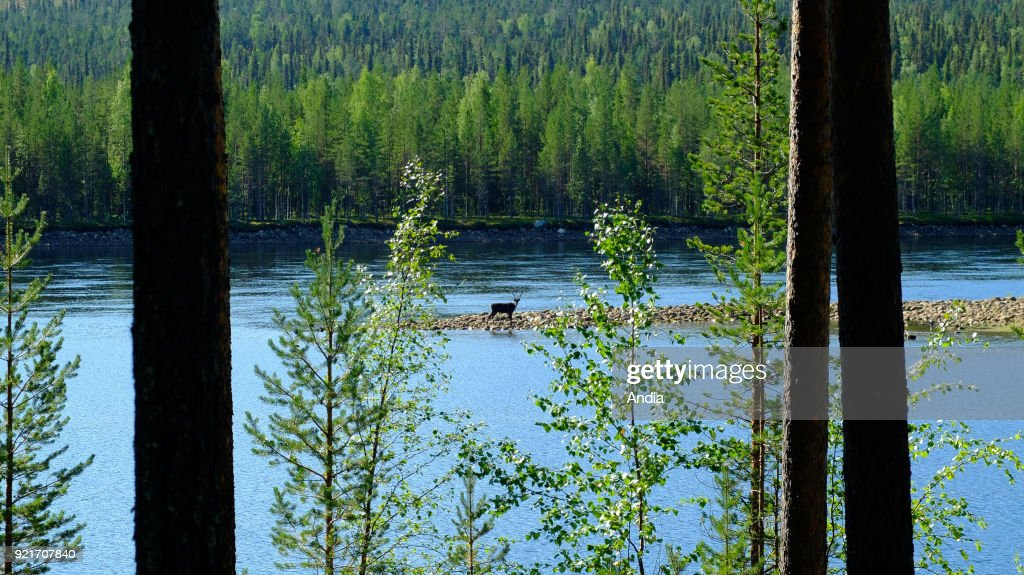Swedish Lapland. : News Photo