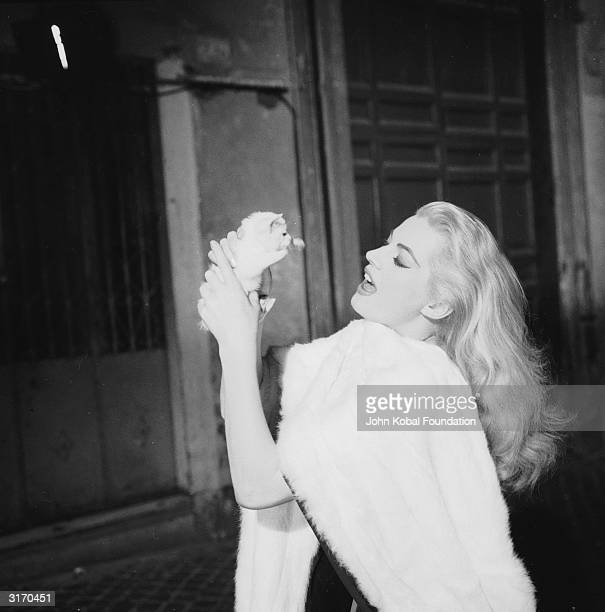 Swedish actress Anita Ekberg plays the glamorous Sylvia in 'La Dolce Vita' directed by Federico Fellini In this scene she holds a tiny kitten in her...