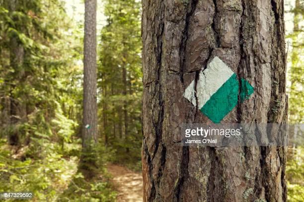 swedish hiking trail markers on trees - トレイル表示 ストックフォトと画像