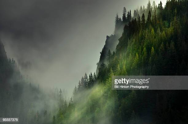 sweeping mist, olympic peninsula - pacific northwest stock pictures, royalty-free photos & images