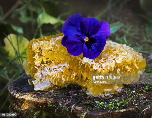 sweet as honey - melanina - fotografias e filmes do acervo