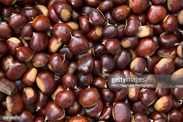 Sweet chestnuts, Castanea sativa