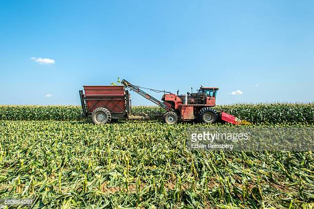 sweet corn harvest - agricultural machinery stock pictures, royalty-free photos & images