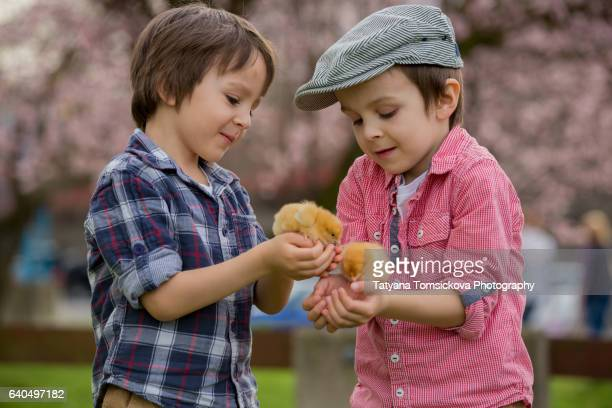 Sweet cute children, preschool boy brothers, playing with little newborn chick in the park, springtime