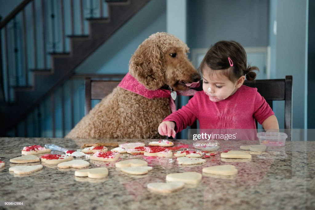 Sweet little girl with her dog in the kitchen : Stock Photo