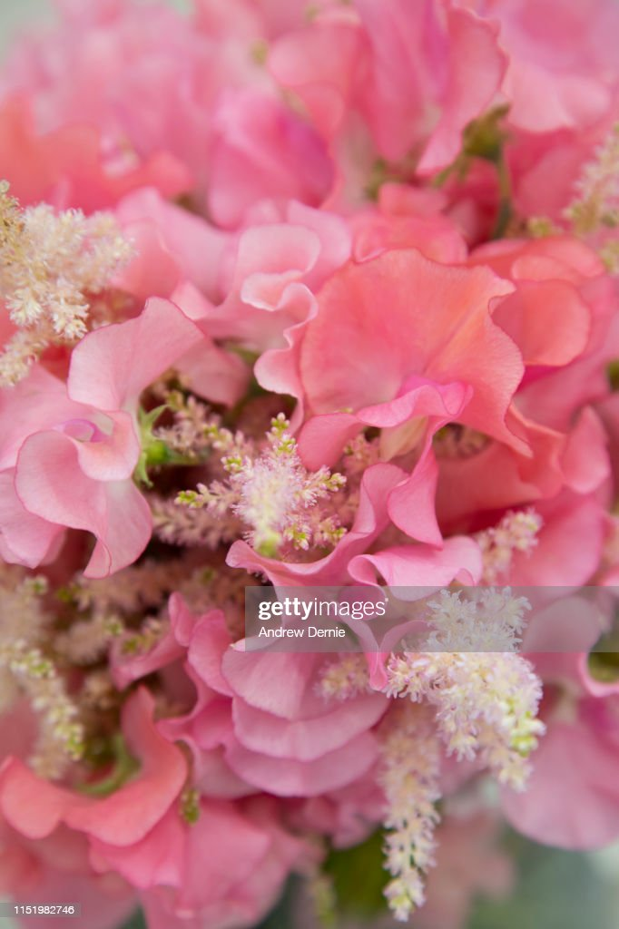 Sweet Pea Flowers Close-up : Stock Photo