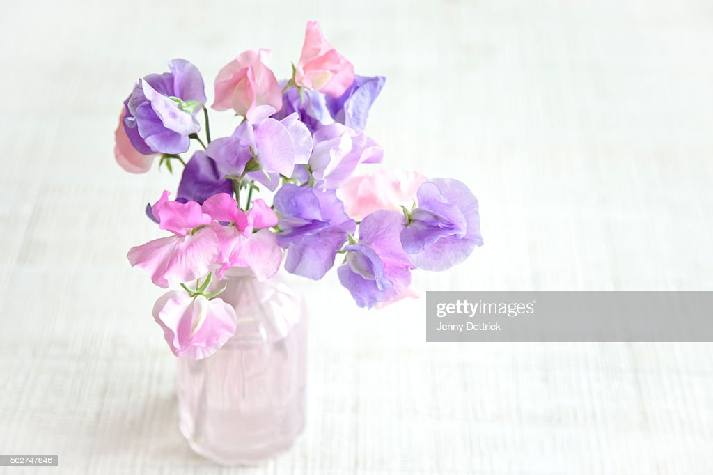Sweet Pea Flowers In A Pink Vase Stock Photo - Getty Images