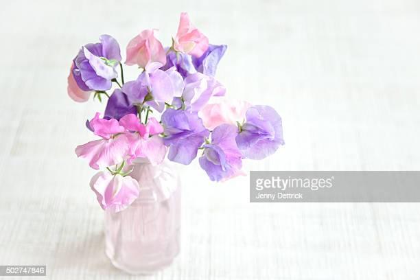 Sweet pea flowers in a pink vase