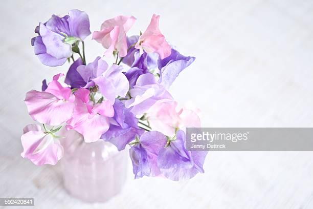 Sweet Pea flowers in a vase