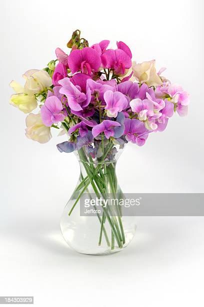 Sweet peas in a vase