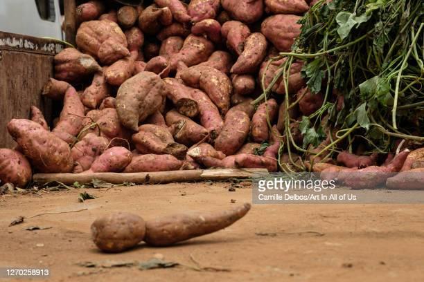 Sweet potatoes on a truck trailer on Septembre 21, 2018 in Entebbe, Kampala district, Uganda.