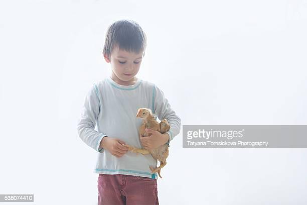 Sweet preschool boy, holding big chicken, back light