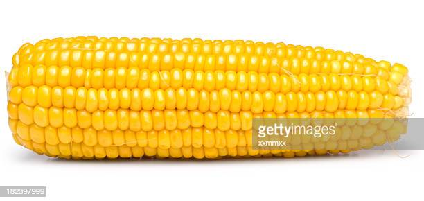 Sweet yellow corn on white background