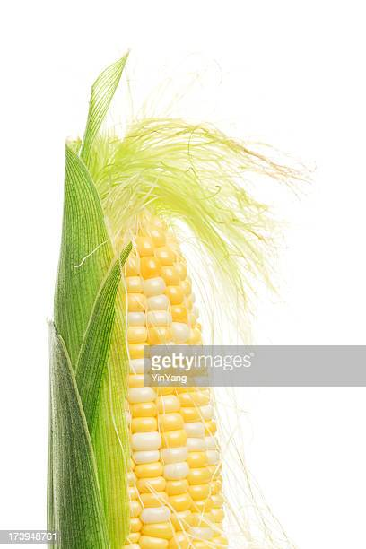 sweetcorn, corn on the cob with silk, husk freshly peeled - corn stock pictures, royalty-free photos & images