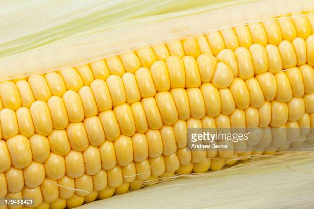 sweetcorn - andrew dernie stock pictures, royalty-free photos & images